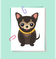chihuahua dog picture poster vector image vector image