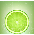 lemonade lime vector image vector image