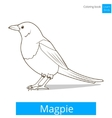 magpie learn birds coloring book vector image vector image