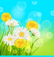 spring daisies and dandelions background fresh vector image