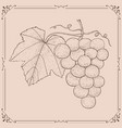 grapes hand drawn sketch on beige background vector image vector image