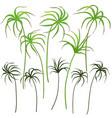 green tsiperus vector image