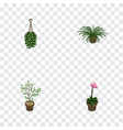 isometric flower set of fern blossom grower and vector image vector image