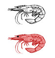 shrimp contour drawing vector image