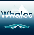 two blue whales vector image