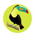 big bright toucan tropical bird vector image