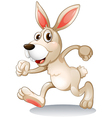 a male rabbit vector image vector image