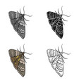moth night butterfly insect pest moth single vector image