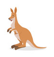 kangaroo with joey bain pouch isolated on white vector image