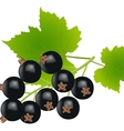 black currants vector image vector image