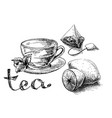 cup mint and tea bag vector image vector image