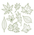 set of autumn leaves nature silhouette icon line v vector image