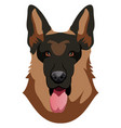 german shepherd on white background vector image