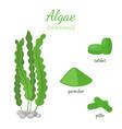 green seaweed - healthy spirulina algae vector image