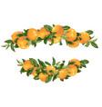headline decor elementwith grapefruit citrus vector image