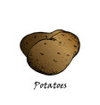 potato drawing vector image