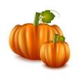 realistic detailed 3d pumpkins set vector image