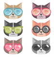 cats with colorful sunglasses isolated on white vector image vector image