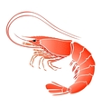 Cooked shrimp isolated on white vector image vector image