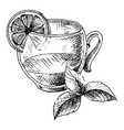 cup of tea and mint vector image vector image