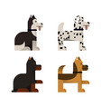dogs doberman shepherd husky and dalmatian vector image vector image