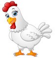 hen cartoon isolated on white background vector image vector image