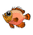 sketch of rockfish vector image vector image