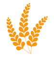 spikelets wheat or barley crop grain vector image