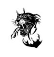 black and white tiger vector image