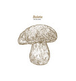 bolete mushrooms hand drawn vintage vector image vector image