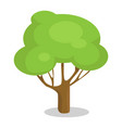 green tree with trunk icon vector image