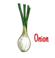 Spring onion vegetable with green leaves sketch vector image vector image