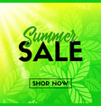 summer sale banner with green leaves shop now vector image