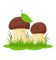 two cartoon mushrooms vector image
