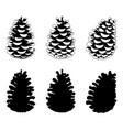 set of different pine cones vector image vector image