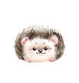 adorable hedgehog white background with cute wate vector image vector image