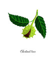 drawing branch chestnut tree vector image vector image
