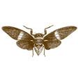 engraving antique cicada vector image vector image