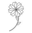 flower stem leaves bloom floral ornament image vector image