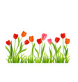 nature banner isolated vector image vector image