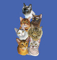 postcard with cats-3 vector image vector image