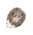 adorable hedgehog whute background with cute wate vector image