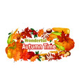 autumn harvest poster of pumpkin corn leaf vector image vector image