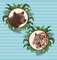 bear and tiger drawing over blue background vector image