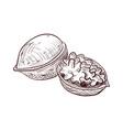 drawing walnut vector image vector image