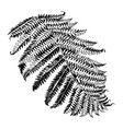 hand drawn branch fern vector image vector image
