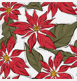 poinsettia winter flower with green leaves xmas vector image vector image