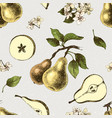 seamless pattern with hand drawn pears vector image