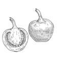 whole and half pepper cherry vintage hatching vector image vector image