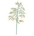 wildflower grass with blossom wild vegetation vector image vector image